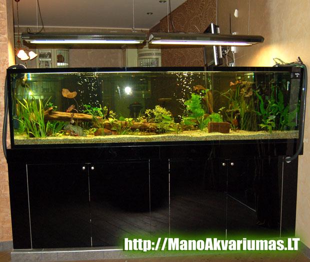 akvariumistinis menas -didelis akvariumas