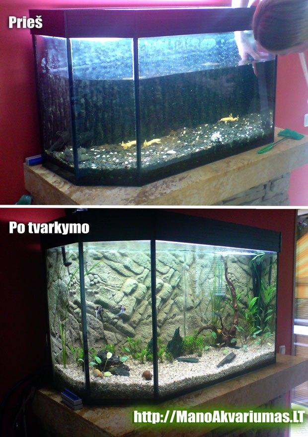 Akvariumo su augalais paleidimas