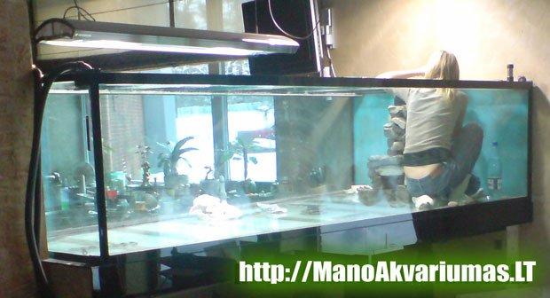 3 tonu akvariumas. Akvariumo dezinfekavimas