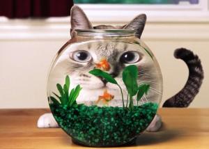 Akvariumo prieziura