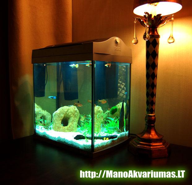 Mazas 10 litru akvariumas