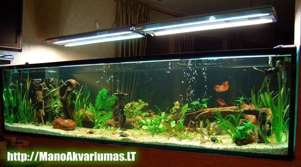 Grazus akvariumas