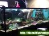 Akvariumo valymas. Augalu sodinimas